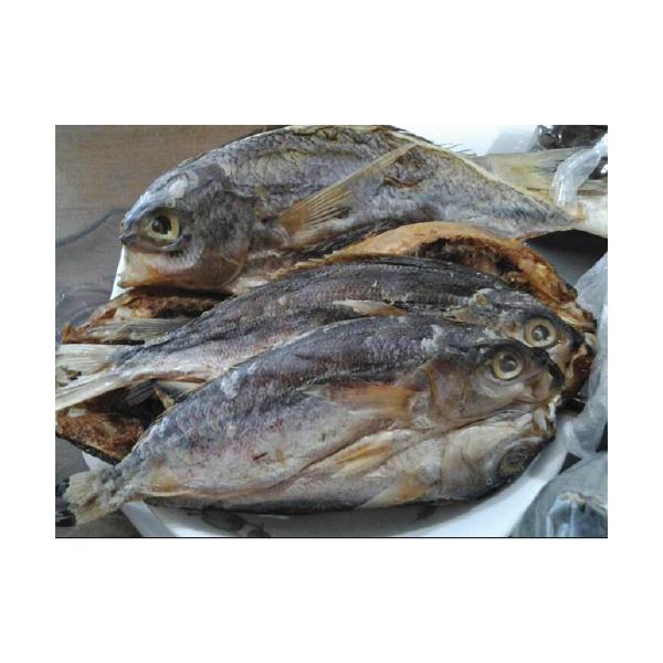 ikanmasinsulit